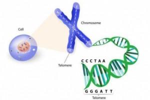 """鹤松医药:一针便可""""使人年轻20岁""""的端粒酶技术诞生了"""