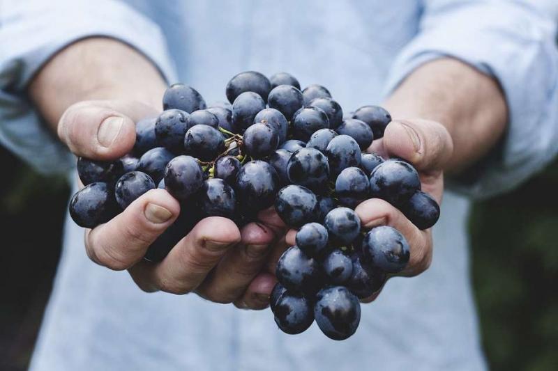 慢性肾炎能吃葡萄吗慢性肾炎饮食上要遵循三个限制
