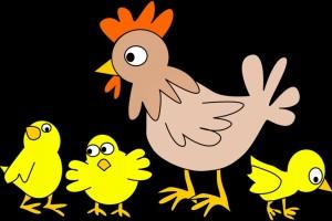 h7n9禽流感的治疗原则禽流感日常预防工作